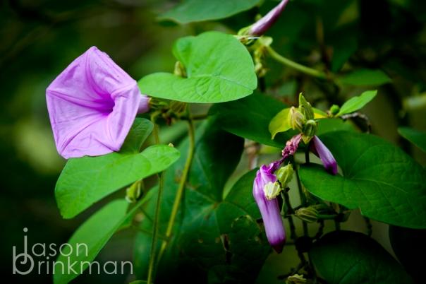 Waimea Gardens